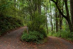 Sehome Hill Arboretum Trail by Lev Shuster